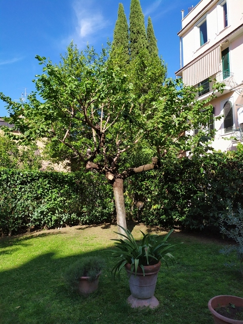manutenzione giardino roma