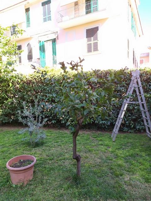 realizzare giardino roma
