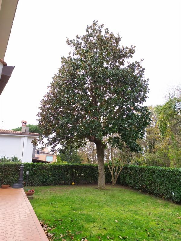 potatura alberi roma